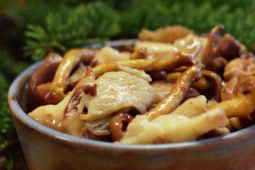 biologische paddenstoelensoep panddenstoelen shiitake eekhoorntjesbrood roomsoep farro funghi kleinste soepfabriek vegan veganistisch vegetarisch